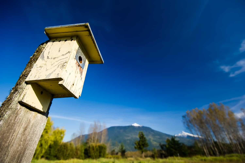 birdhouse in Revelstoke