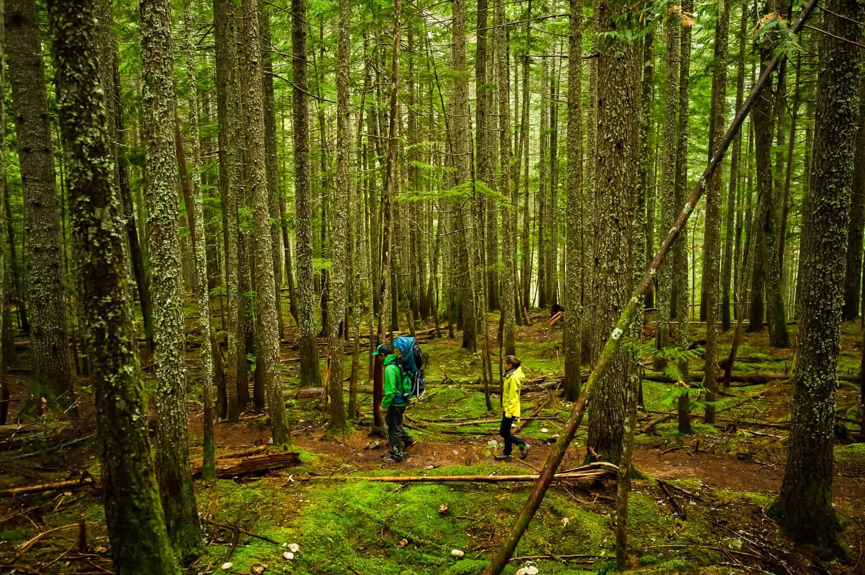 Family hiking in Revelstoke rainforest